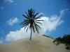 Duna (Morro) di Pititinga